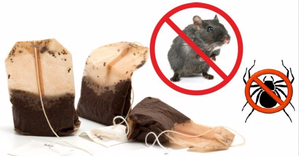 Use Justr One Tea Bag You Will Never See Spiders Or Mice